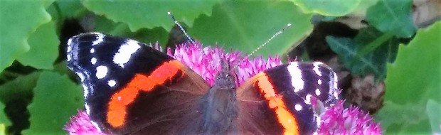 2016-09-14 red admiral banner