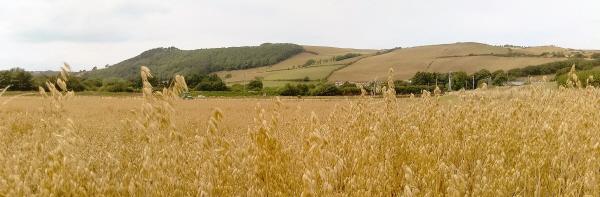 oats banner pic
