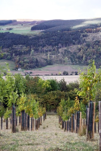 Scottish agroforestry